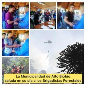 La Municipalidad de Alto Biobío saluda en su día a los Brigadistas Forestales, en especial a los más de 150 jóvenes de nuestro territorio que desempeñan esta honorable labor.